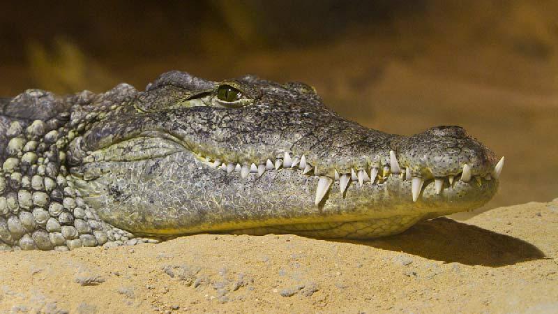 cocodrilo acuario de zaragoza